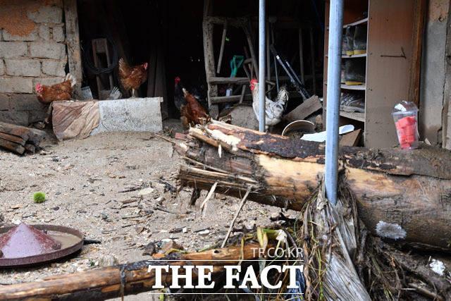 [TF사진관] '폭우에 집 잃은 닭'